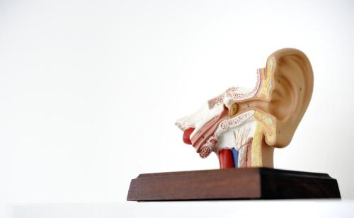 Mittelohrchirurgie Modell | Dr. Schuster München